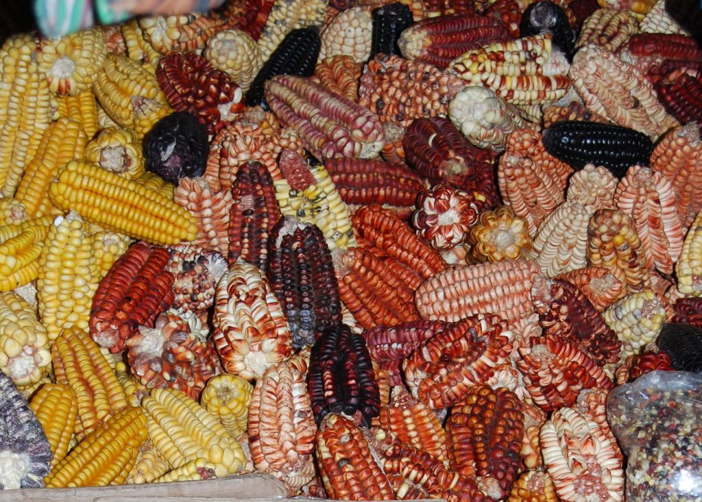 Rainbow of Dry Corn in the Market, Cuzco