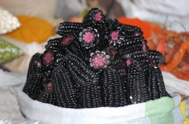 Purple Corn to Make Chicha Morada