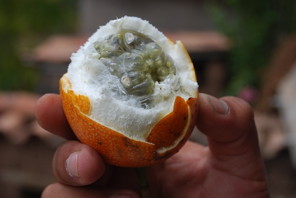 Granadilla Ready to Eat