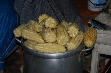 Peru's Native Corn Protected from Genetically Modified Seed