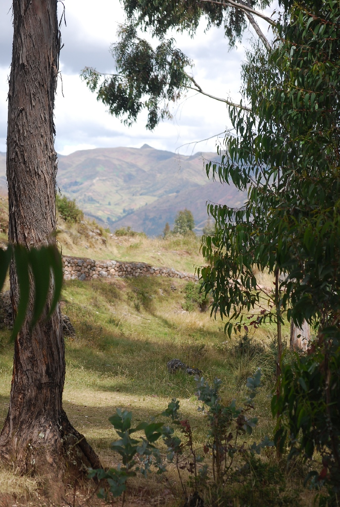 A Classic View by Cuzco Framed in Eucalyptus