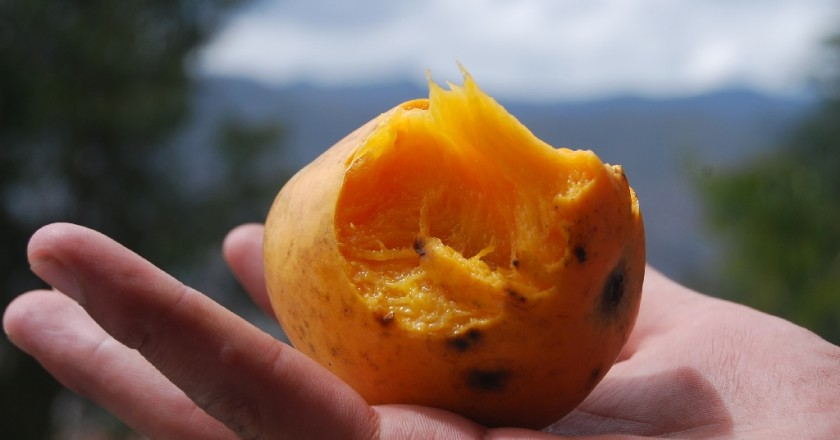 Eating a Mango Without Pealing