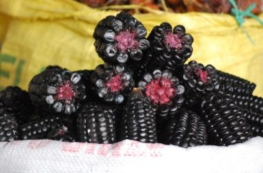 Peru's Famous Purple Corn
