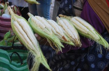 Ears of Fresh White Corn