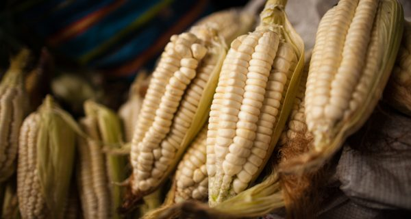 Fresh White Corn (Alonzo Riley)
