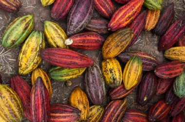 Cacao Pods from Echarate in Anta (Phoyo: Wayra)