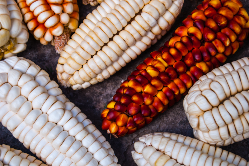 Colorful Corn of Cuzco (Photo: Wayra)