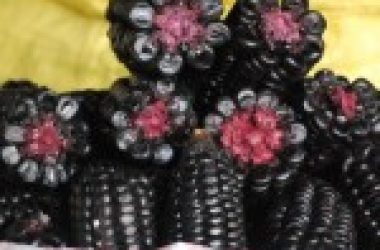 Purple Corn (Photo: Wayra)