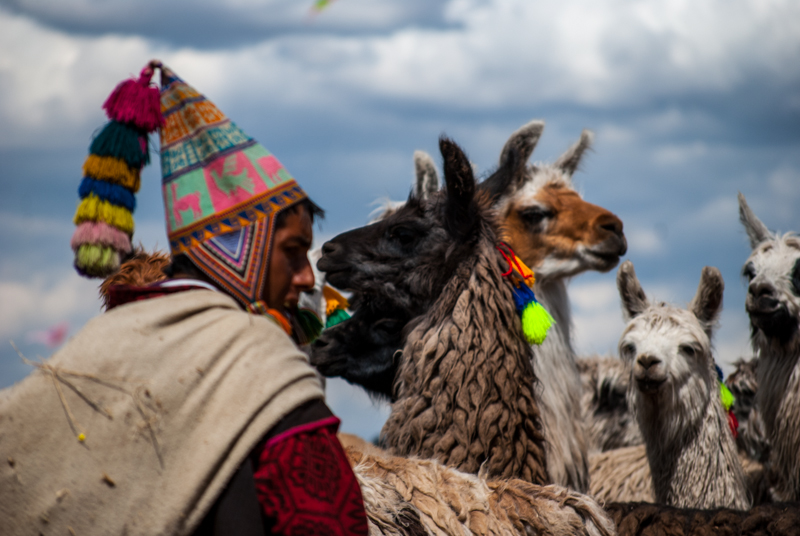 A Herder and His Llamas (Photo: Walter Coraza)