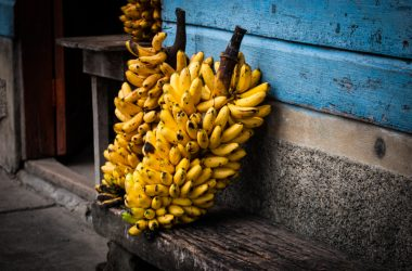 Little Bananas Ready to Be Eaten (Photo: Walter Coraza)