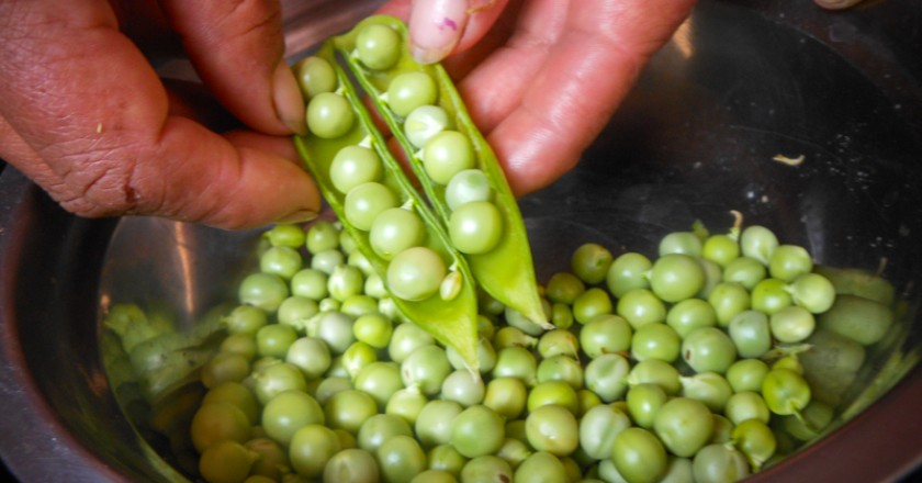 Fresh Peas, The Sacred Ingredient of Cuzco's Cuisine (Photo: Wayra)