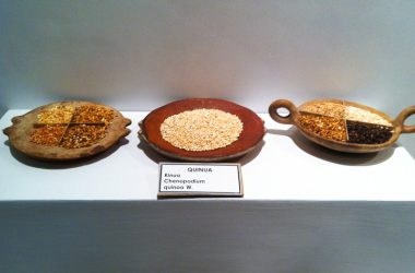 Display of Natural Ingredients (Photo: Wayra)