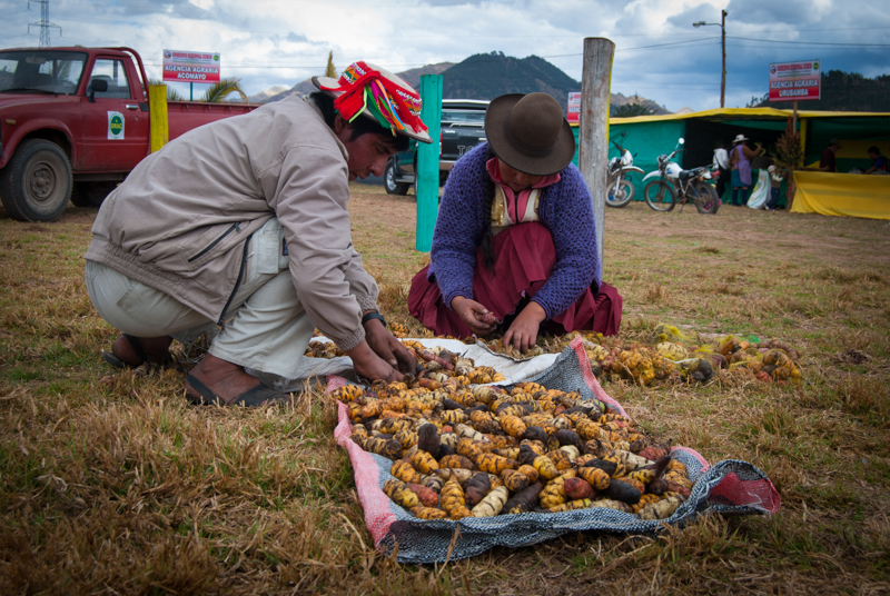 Year of Family Agriculture (Photo: Walter Coraza Morveli)