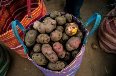 Huayro Potato from Cuzco (Photo: Walter Coraza)