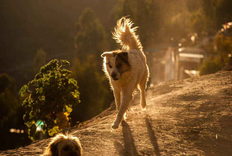 A Dog in the Sunlight (Photo: Walter Coraza Morveli)