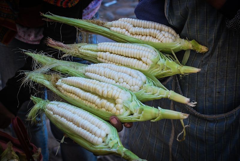 Fresh Picked Corn