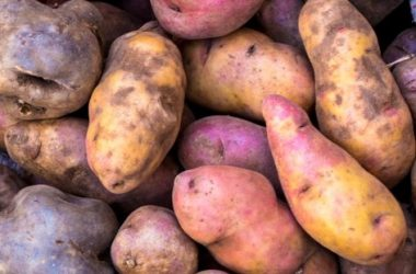 Colorful Potatoes (Photo: Wayra)