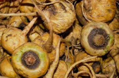 Tubers of Fresh Maca in the Market (Wayra)