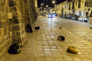 Stray Dog Sleeping in Cuzco's Streets