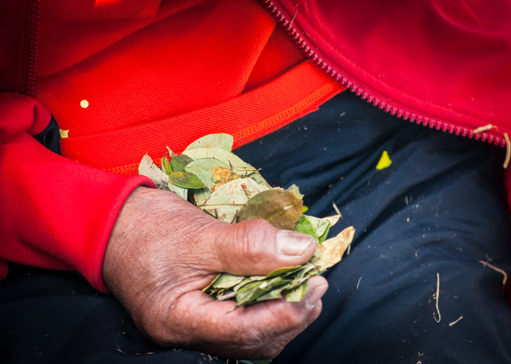 A Handful of Coca Leaves (Walter Coraza)