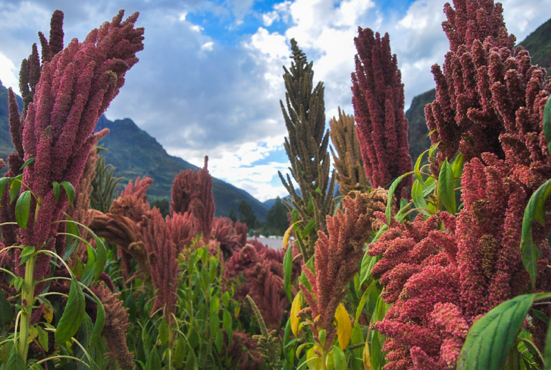 September Brings Growth and Color to Cuzco (Walter Coraza Morveli)