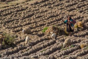 Photo of Climate Changes Affect The Farmers of The Cusco Region