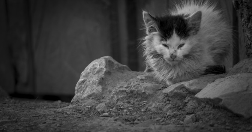 A Little Cat in Cuzco