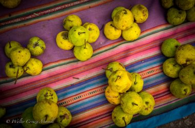 Small Pear Fruit from Cuzco's Sacred Valley