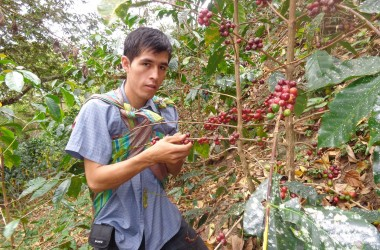 A Young Coffee Farmer at Work