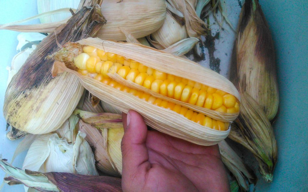 Mama Sara - Mother Corn (Walter Coraza Morveli)