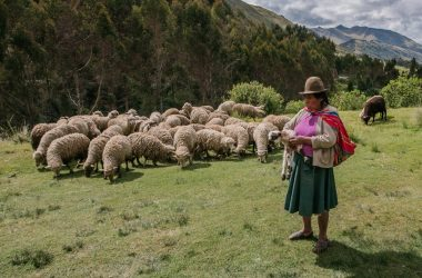 Herding Sheep in Cusco (Craig Howes)