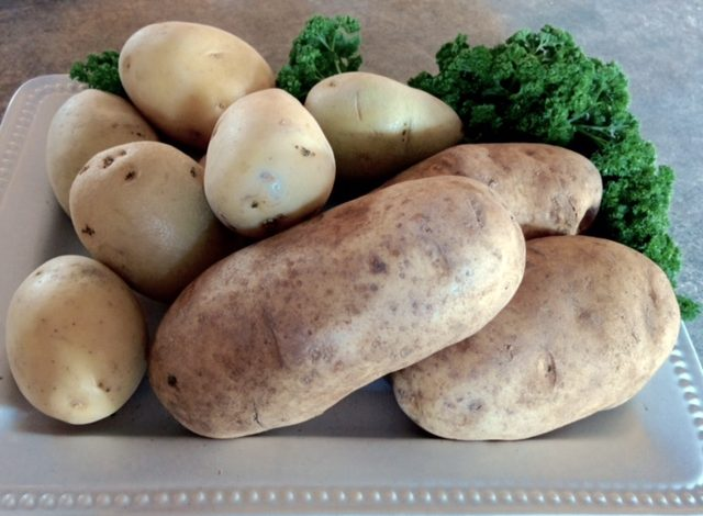 Idaho Gold and Russet Potatoes (Teresa Wilson)