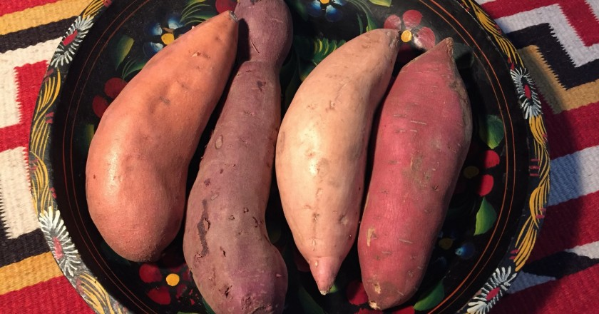Four Different Kinds of Sweet Potatoes in Utah