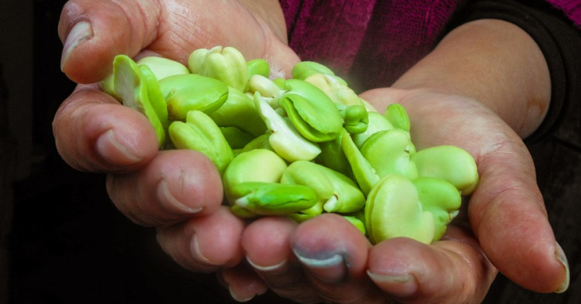 Fresh and Green Beans from the Farms of Cusco