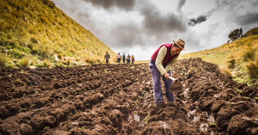 Working the earth in the south of Cusco