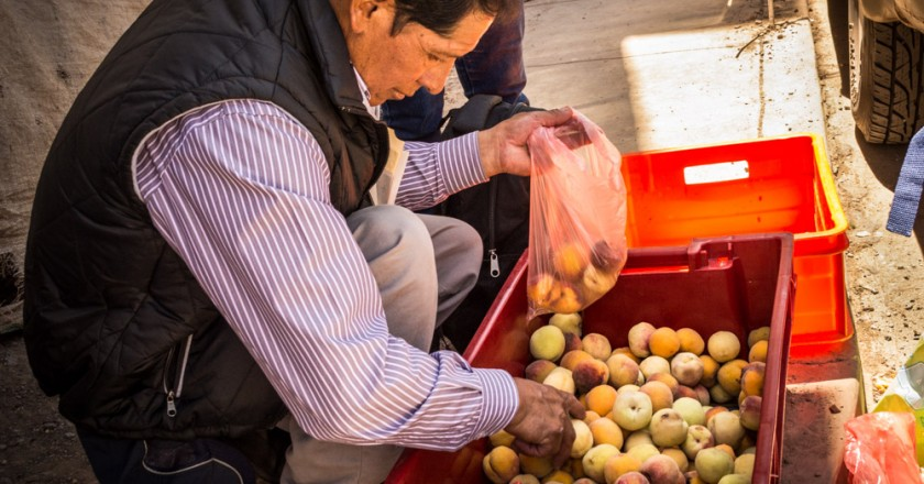 Selecting peaches from a bin (Hebert Edgardo Huamani Jara)