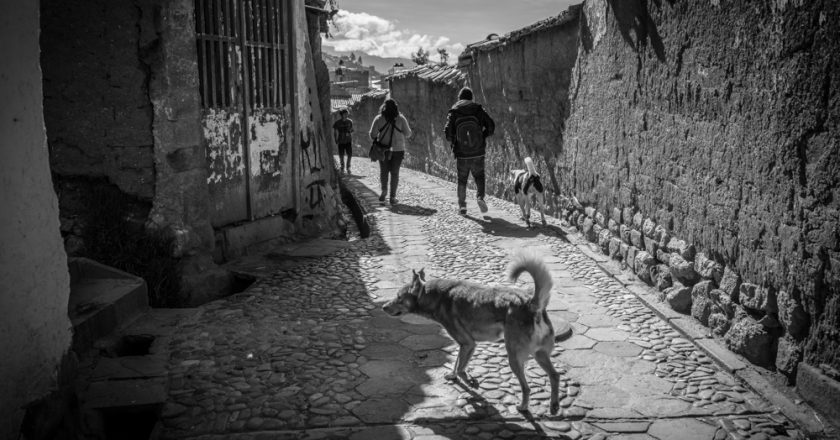 Canines roam freely around Cusco's neighbourhood (Photo: Walter Coraza)