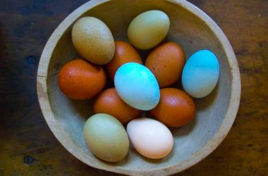 Blue Chickens Eggs