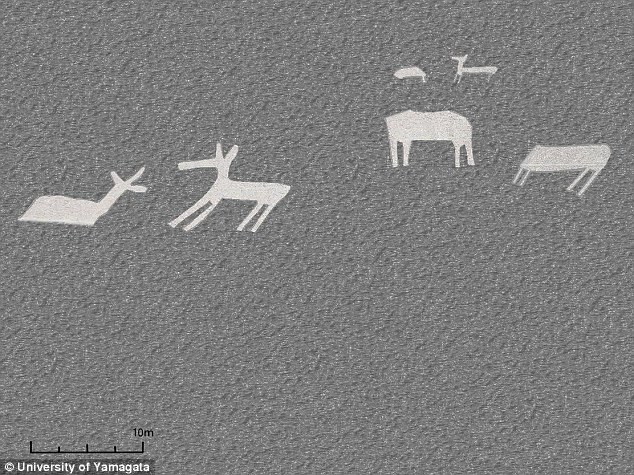 Japanese Archaeologists have discovered 24 new geoglyphs, including several that look like Llamas .
