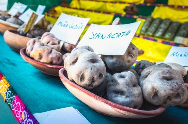 Exhibit of Native Potatoes in the Huancaro Fair (Walter Coraza Morveli)
