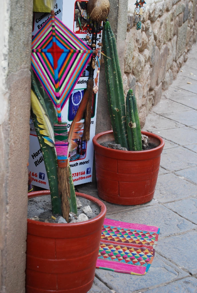 Cactus Growing at Home (Walter Coraza Morveli)