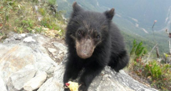 Pablito the bear in Machu Picchu (Photo: Fidelus Coraza Morveli)